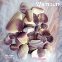 The Wampum Shell